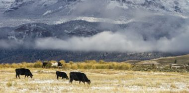 Beef tracking gets easier as BeefChain receives USDA certification