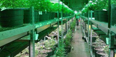Canada cannabis blockchain pilot hailed 'future of medical cannabis'