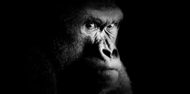 Welcome to the jungle: Patrick Thompson talks Gorilla DAO with Bitcoin Association